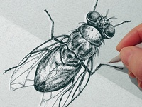 Dotwork Insects