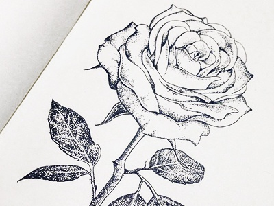 Dotwork Rose hand drawn tattoo ink illustration flower rose dotwork blackwork