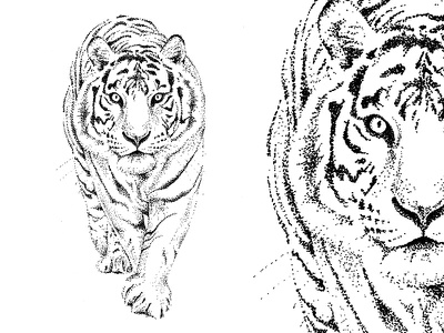 Dotwork Tiger hand drawn tattoo ink illustration animal tiger dotwork blackwork