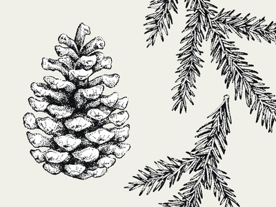 Dotwork Fir hand drawn art inkdrawing decorative vector illustration drawing ink dotwork blackwork forest tree branch fir cone
