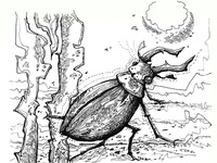 A beetle from the graphic set of insects
