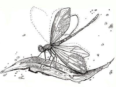 A dragonfly from the ink set of insects