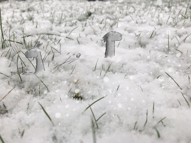 Arctic Microllamas photo manipulation kidlit illustration illo snow llamas nature