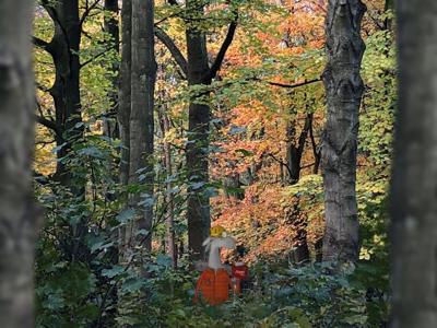 Llumberjack nature trees llama ipad moment procreate