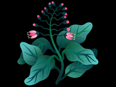 Flower flower procreate illustration digital