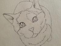 Bibble the cat sketch