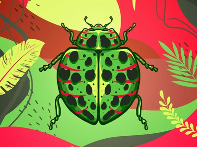 insect 04 colors illustration colorful insect
