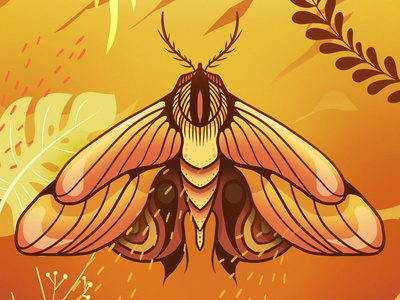 insect_10 insect colors colorful illustration
