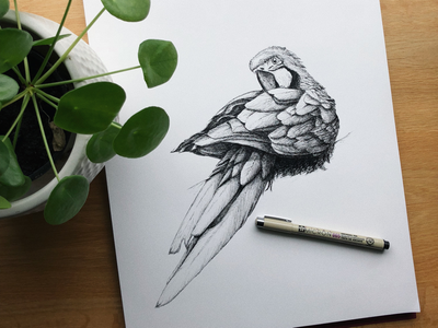 Parrot micron005 sketching freehanddrawing freehand handdrawing parrot drawing pendrawing pencildrawing sketch