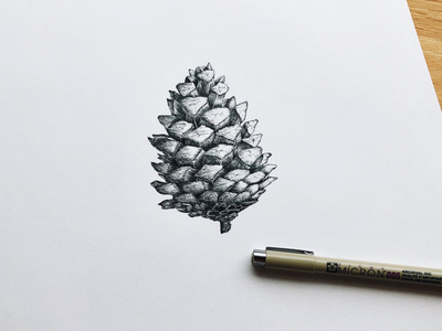 Pine cone micron005 sketching freehand detaildrawing handdrawing drawing pencildrawing sketch pendrawing freehanddrawing illustration pinecone