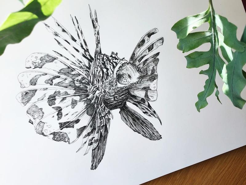 Lionfish micron003 under water lionfish ocean black  white art fish handdrawn illustration
