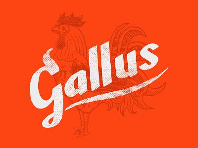 Gallus Buffalo Wings branding lettering illustration hot gallus wings chicken buffalo wings