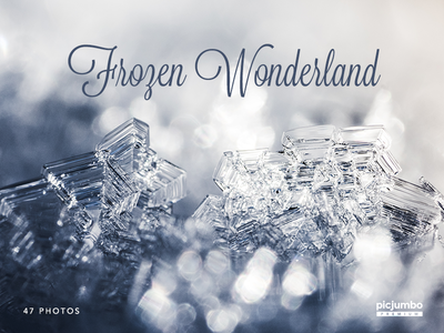 New PREMIUM Collection! Frozen Wonderland webdesign graphic winter stock visual background images stock photos photos picjumbo