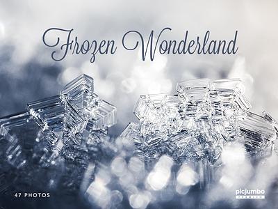 New PREMIUM Collection! Frozen Wonderland webdesign graphic winter stock visual background images stock photos photos picjumbo