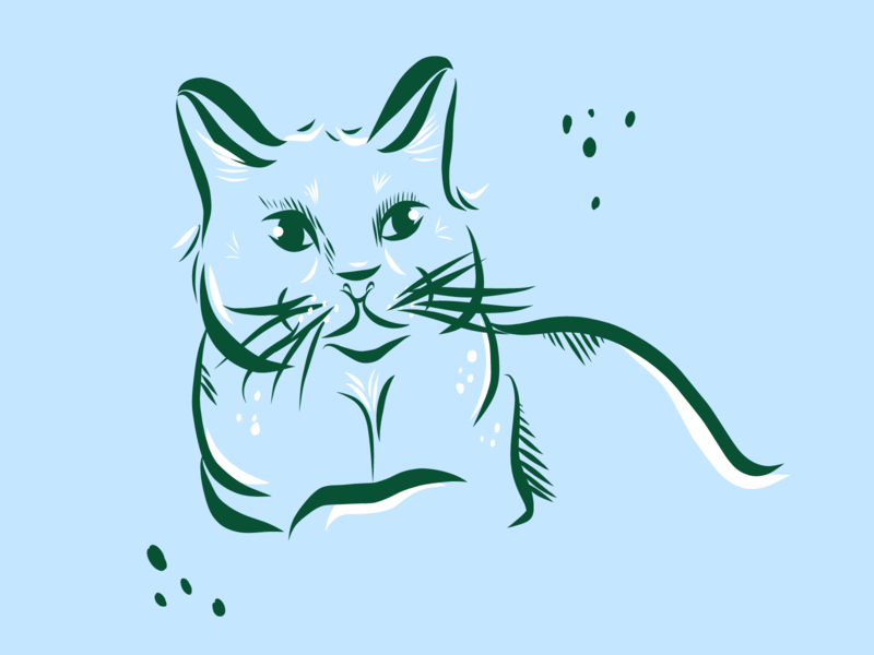 Stella sketch cats cat design illustration