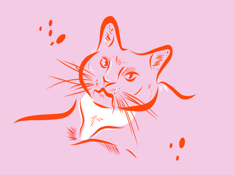 Franny sketch cats cat illustration design
