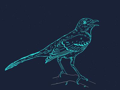 Mockingbird Etching texture mockingbird illustration bird etching
