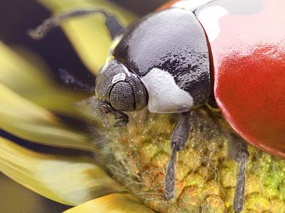 Ladybug Journey - Visual 2 photorealistic photorealism insect real life shot nature vray c4d cinema 4d maxon nicolas delille ladybug journey