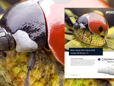 Gumroad Tutorial - Make award-winning 3D illustrations artist insect nature illustration cgi maxon3d photorealistic photorealism maxon 3d artist nicolas delille ladybug journey gumroad tutorial photoshop zbrush cinema 4d