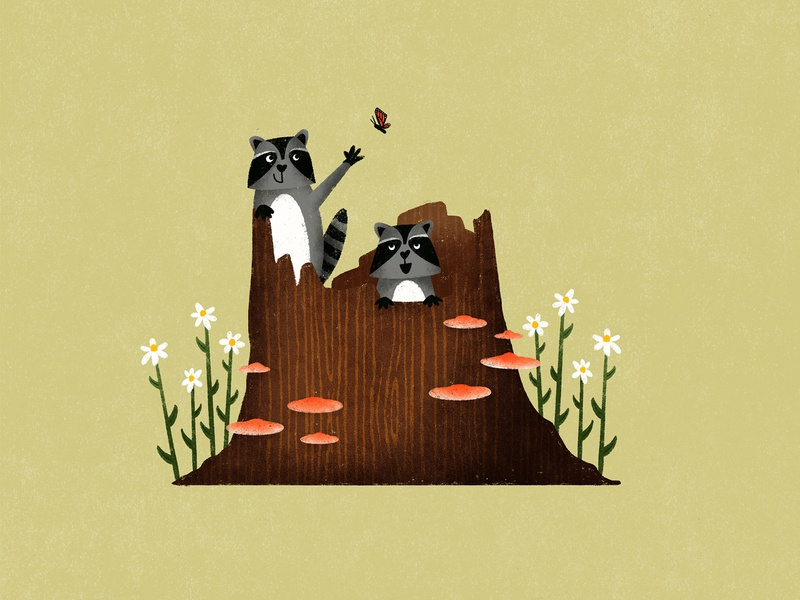 Raccoons raccoons animals card greeting card procreate illustration