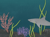 Shark Lurking