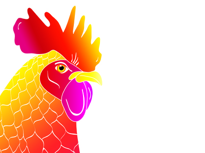 Rooster Logo Design Close Up character hand drawn colourful rooster logo design illustration design