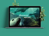 Portfolio of underwater photographer