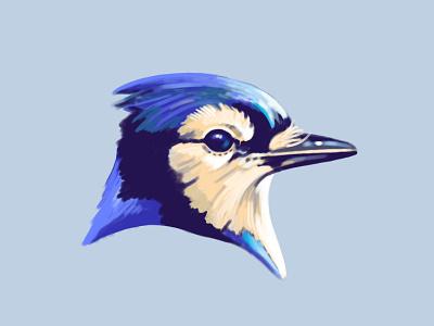 Blue Jay feathers illustration retro supply brush animal beak blue jay bluejay gouache painting procreate bird