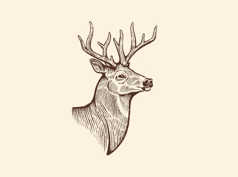 Deer rusty nib bust stag antlers procreate sketch illustration animal buck deer