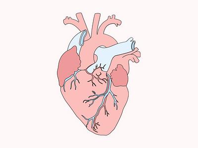 Heart 🖤 organ human body light minimal poster heart beat flat illustration simple human heart