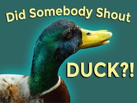 Did somebody shout DUCK?!
