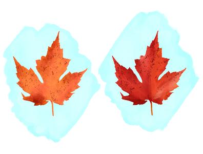 Leaf Study (Adobe Fresco) illustration fresco autumn party leaves leaf outdoor nature tree nature illustration