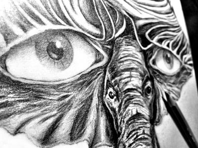 Eye of the Elephant elephant eye drawing sketch pencil