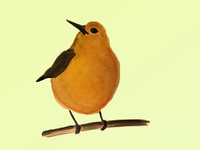 Yellow Warbler Illustration illustration watercolor