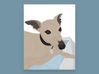 Whippet Illustration - Reuben