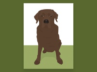 Chocolate Labrador Illustration - Tilly