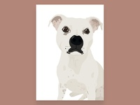Staffordshire Bull Terrier Illustration - Toby