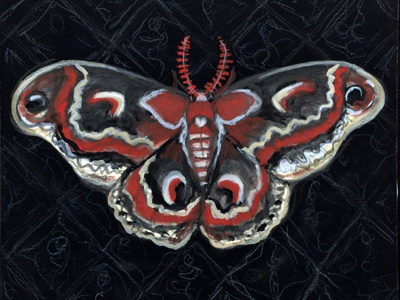 Cecropia Noir watercolor illustration cecropia moth moth