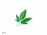 write cannabis