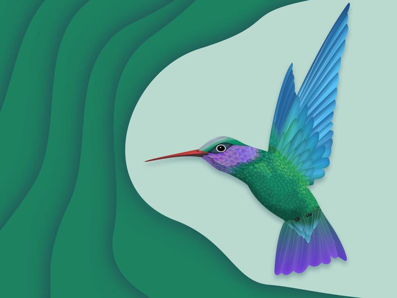 Humming bird 插图 设计 ui