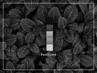 Black Pantone | Nature Love
