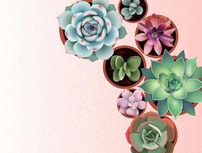 Succulents botanical illustration plants adobe illustrator vector illustration