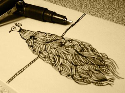 Brid hosseinyektapour 1ta illustratin drawing