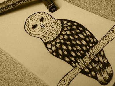 Owl hosseinyektapour 1ta illustratin drawing