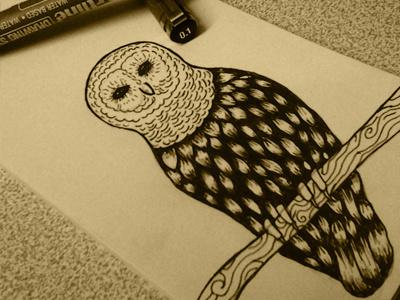Owl hosseinyektapour 1ta illustratin drawing