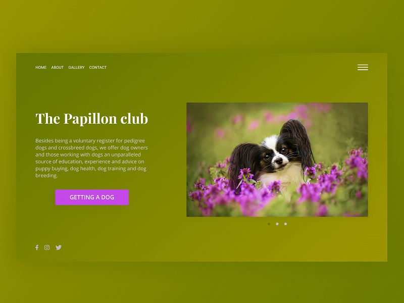 Papillon club main page lilac papillon dog gradient green