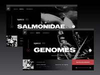 Homepage Exploration + Specc +