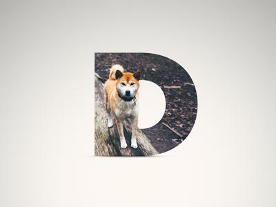 D - Dog woods log shadow proxima nova proxima doge dog letter d