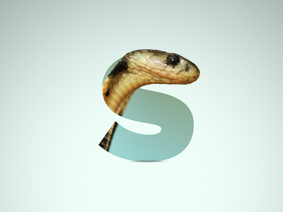 S - Snake reptil shadow proxima nova proxima animal snake letter s
