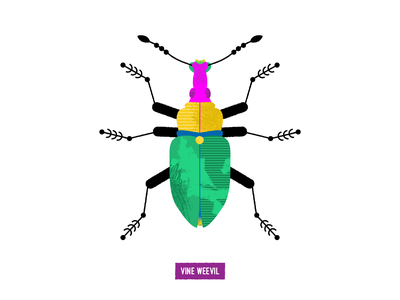 vine weevil illustration texture vector insect bugs bug
